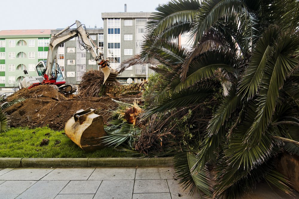 Safe Tree Removal