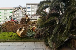 Tree Removal Company in South Miami