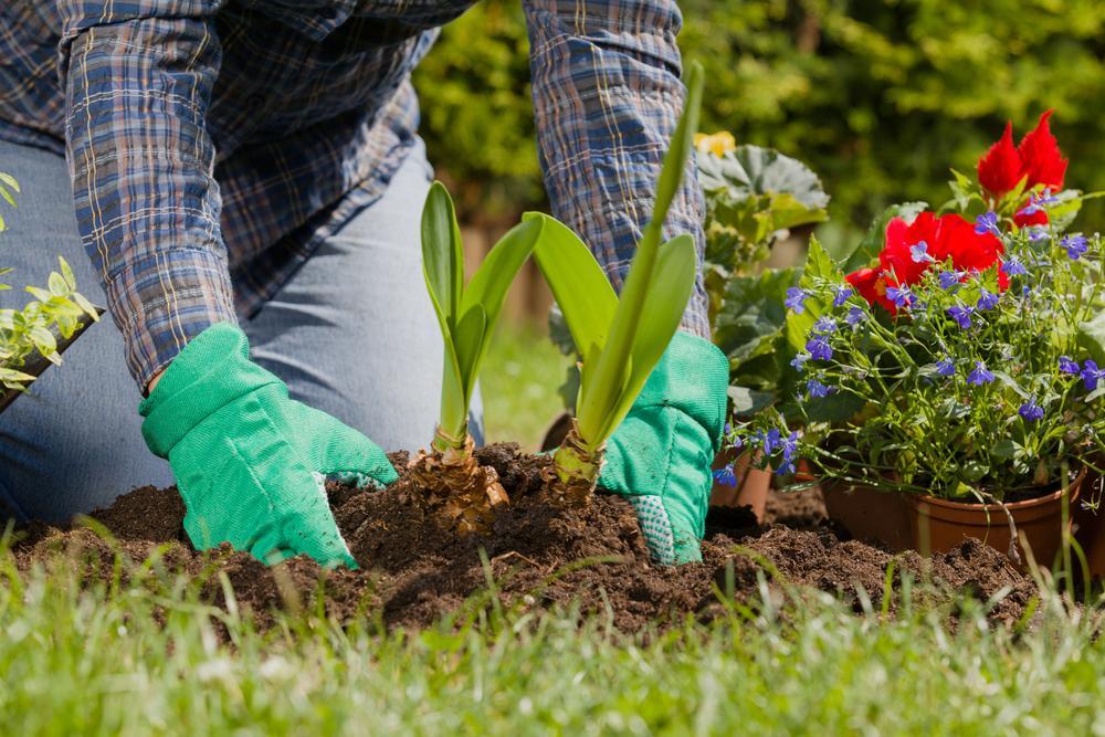 Landscaping Plants
