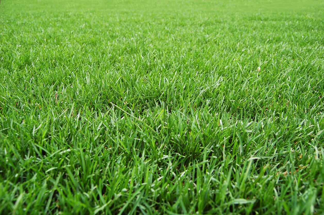 Tips for a Greener Lawn
