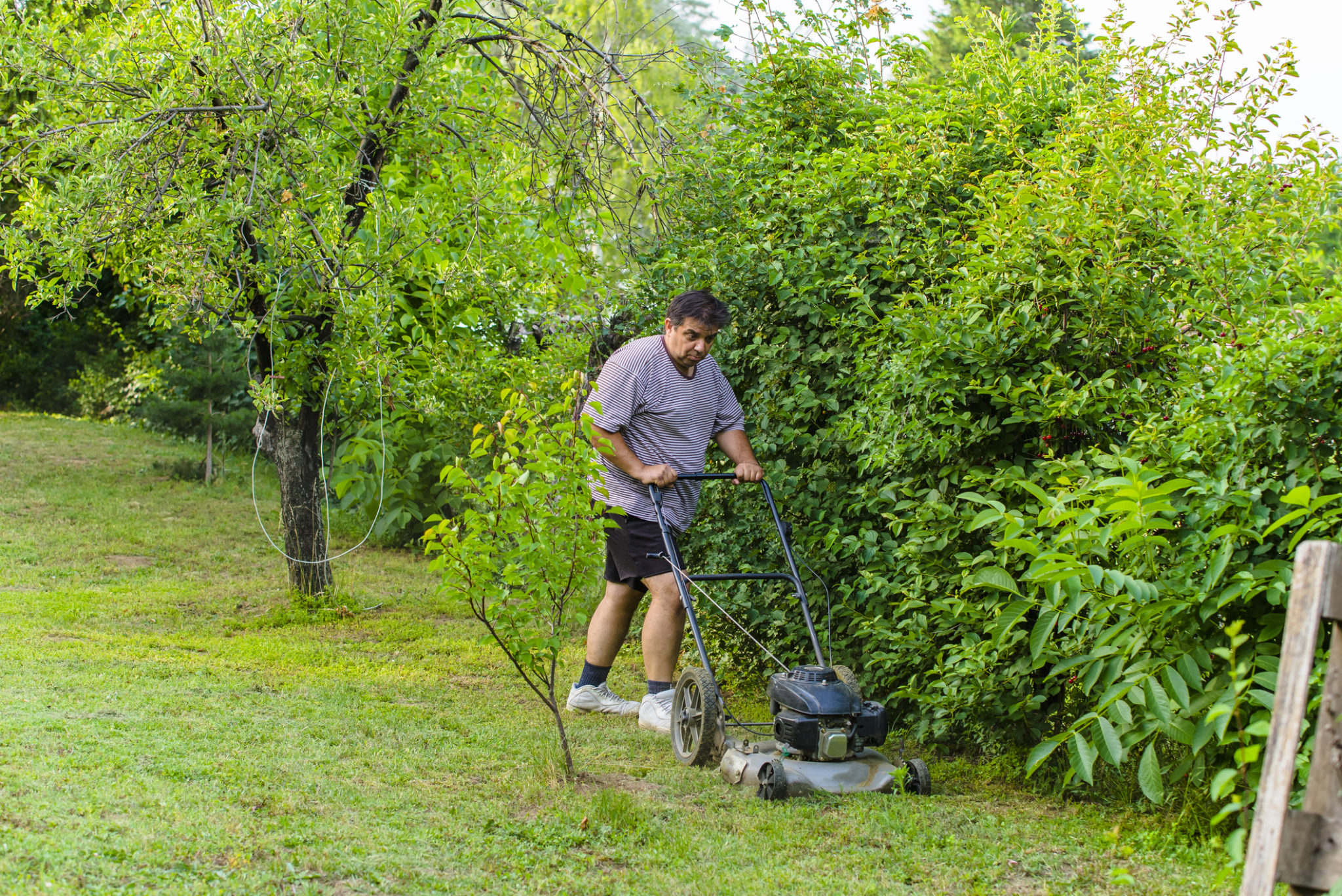 basic lawn tips