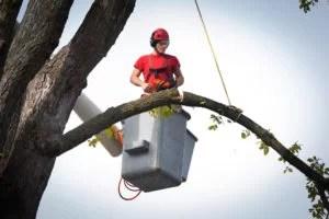 Tree Removal Service in South Miami