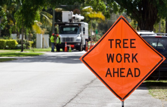 Affordable Tree Trimming in Westchester