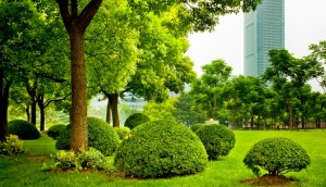 Professionally Maintained Lawn Services Miami