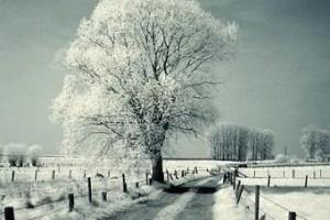 Lovely Winter Season Sms For All.