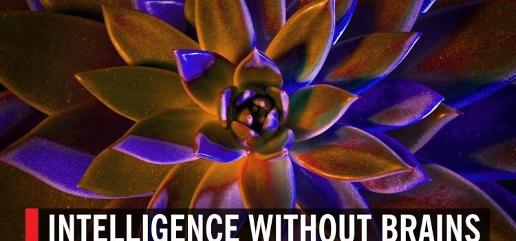 Intelligence Without Brains?