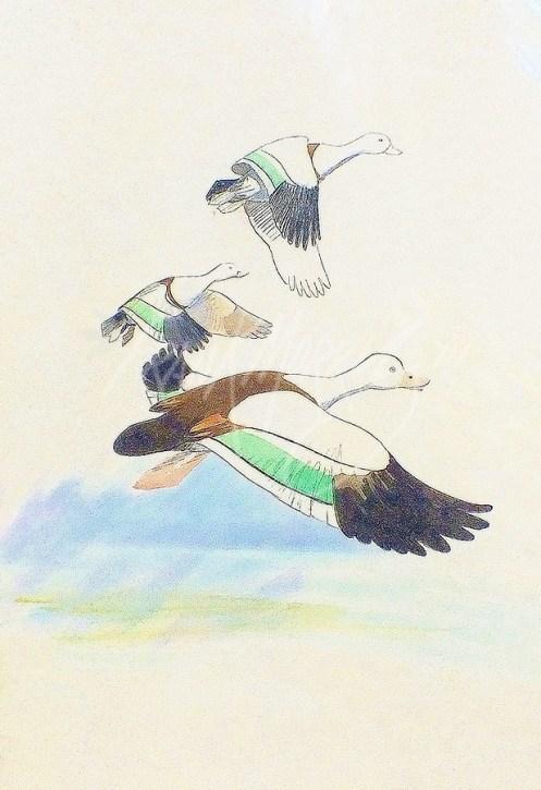 (CS4) Burdekin Ducks 76 x 51 cm $150
