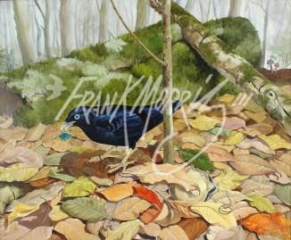 (Y469) Lost and Found (Satin Bowerbird) 51 x 61 cm $375