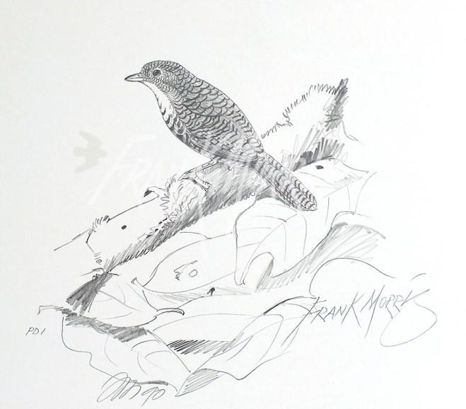 (PD1) Rufous Scrub-Bird 76 x 51 cm SOLD