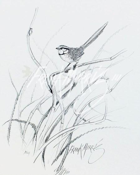 (PD29) Grey Grasswren 76 x 51 cm $60