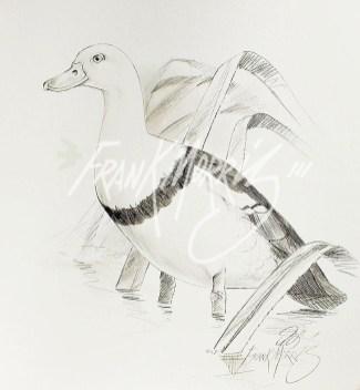(PD21) Radjah Shelduck 76 x 51 cm $60