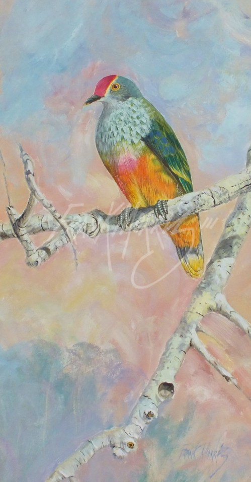 (Y331) Resting Fruit Dove 44x23 cm $280