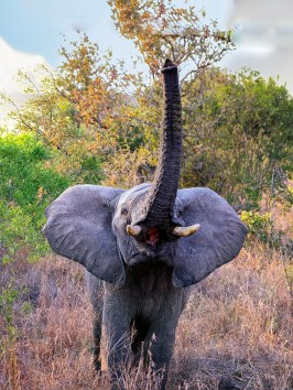 20150623-south-africa-02141_20150623-south-africa-02182-4 images-Edit-bob