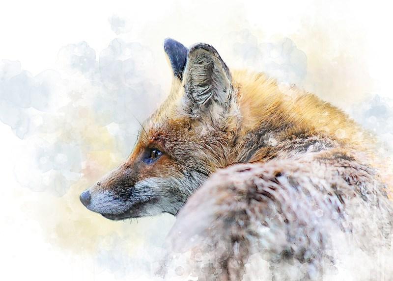 fox-2685471_1280