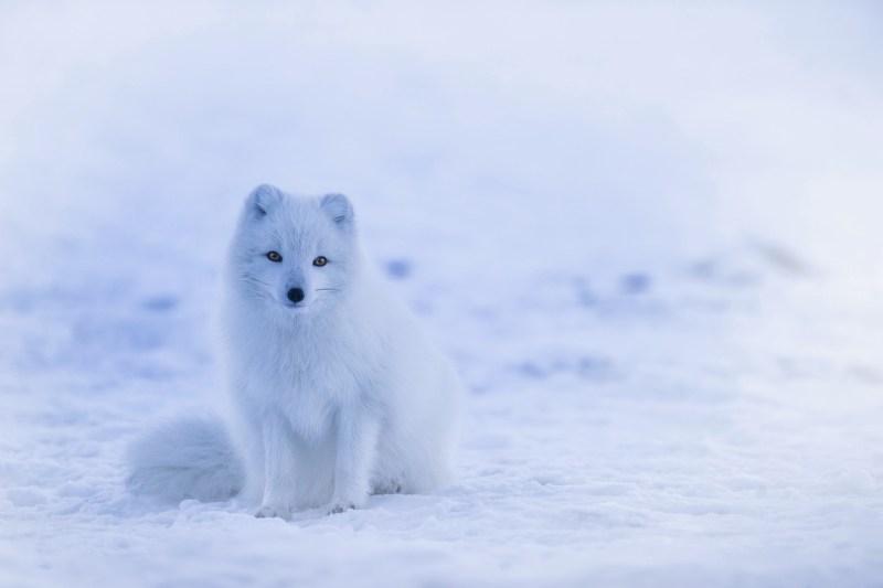 iceland-1979445_1280