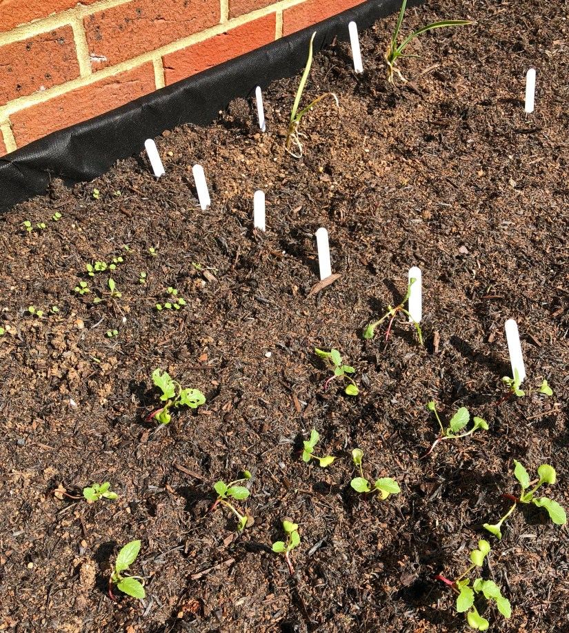 VegTrug seedlings