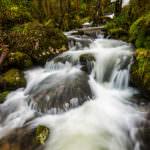 Agua y bosque