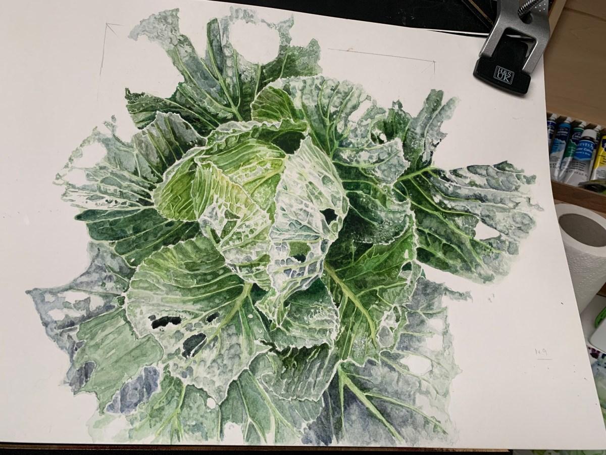 Watercolour caterpillar eaten cabbage