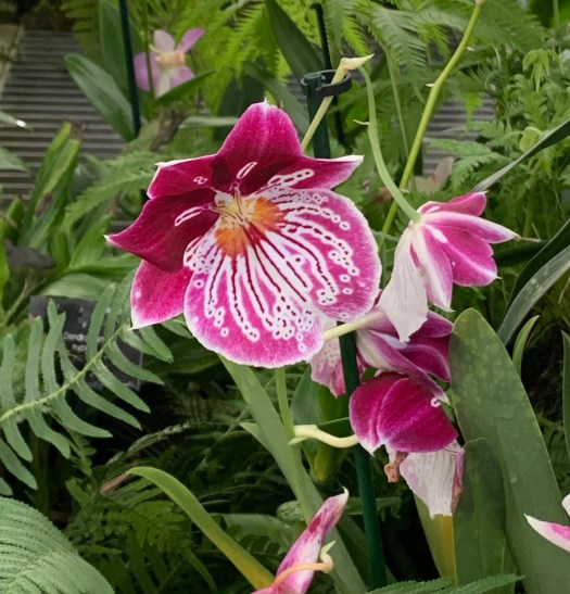 orchids photo by franscienceart