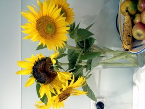 sunflowers11
