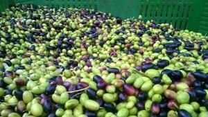 olio prodotti tipici calabresi
