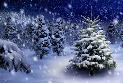 Ein weihnachtlicher Tannenbaum nachts draußen bei Schneefall