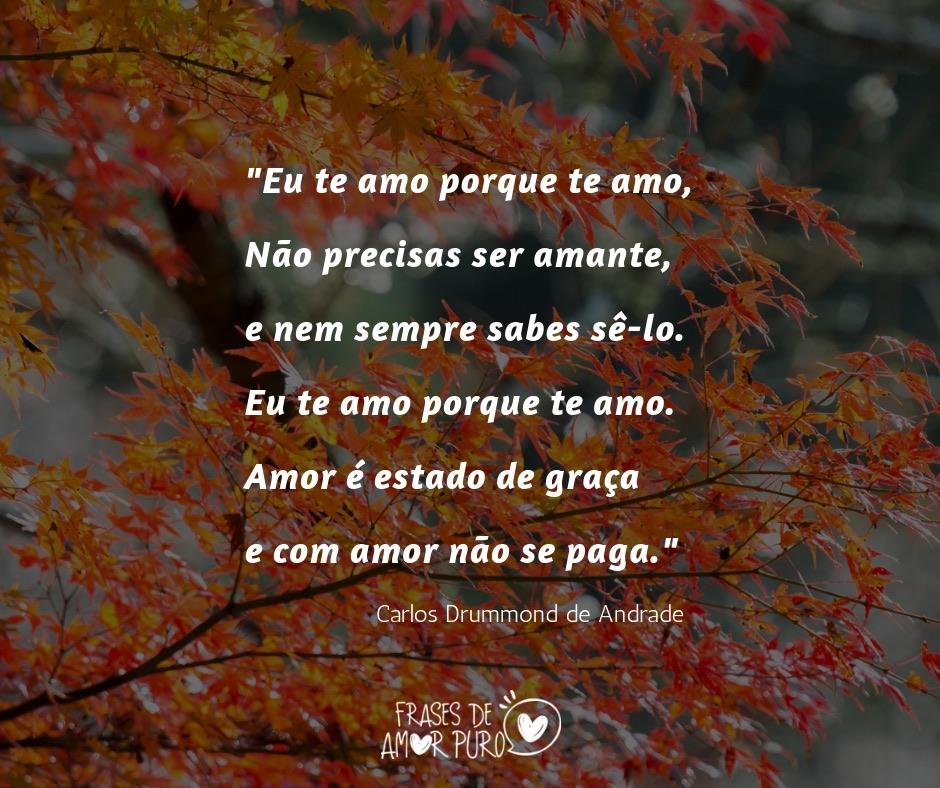 Eu Te Amo Porque Te Amo Frases De Amor Puro