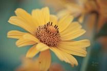 Gelb in Mintgrün