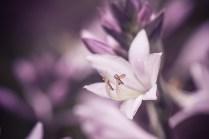 Blütenmakros