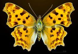 frauenfiguren zeitstrahl frauen in der wissenschaft emma hutchinson c-falter weiblich