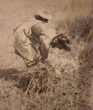 Frau Plank bei der Heuarbeit1