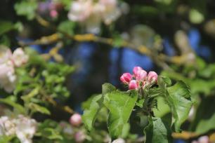 Frühlingsfarben (19)