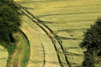Baumwandelweg (4)