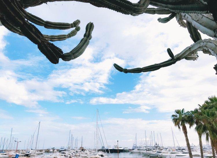 Der größte Kaktus meines Lebens Sanremo1