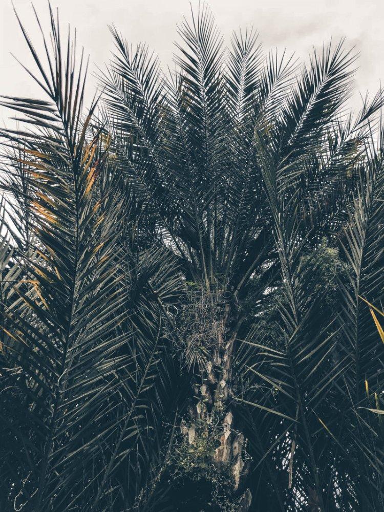 Die Botanik in Sanremo