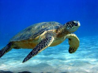 Fetos humanos y huevos de tortugas