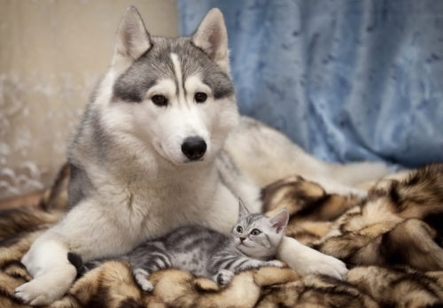 Собака и котенок Настоящий друг появляется тогда, когда рядом никого не осталось