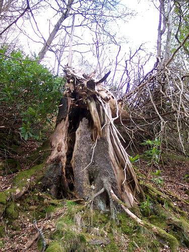 life-and-death-of-tree