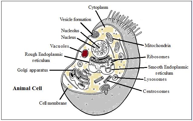 cell   the fundamental unit of life  u2013 summary  u2013 freakgenie
