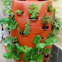 vermiculture-vertical