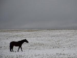 Black Horse Winter 8x10 Print