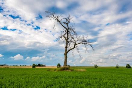tree in field landscape photograph