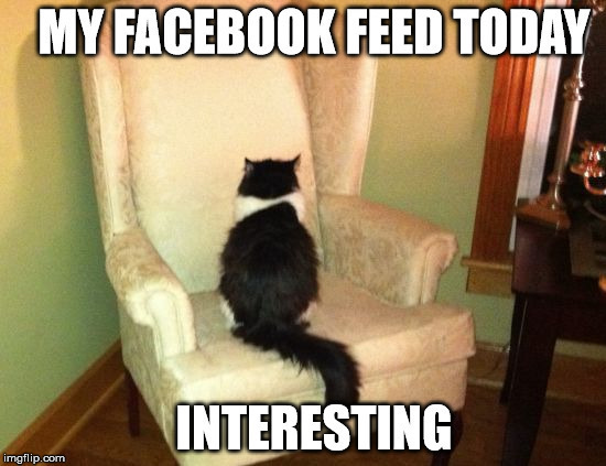 Facebook-feed-cat.jpg