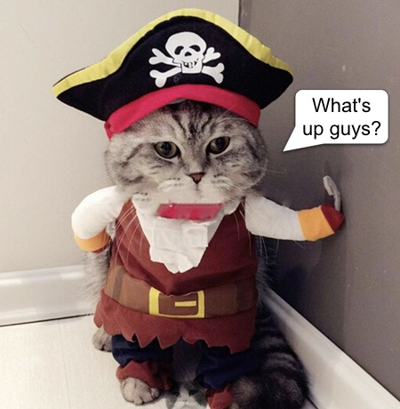 Cat-pirate