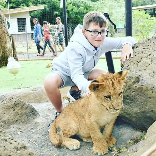Playing with Lion Cubs at Casela Safari Park Mauritius