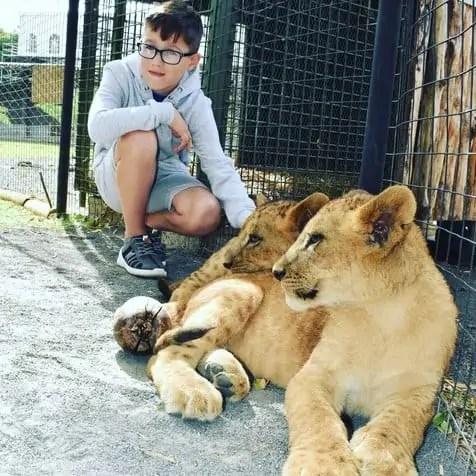 Stroking lions at Casela Safari Park Mauritius