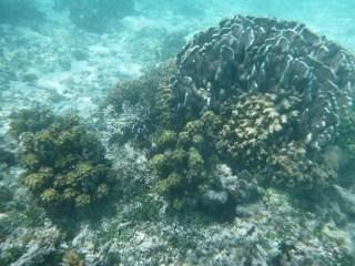 Snorkeling - Anse Source d'Argent