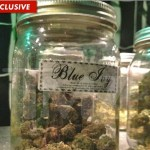 Blue Ivy Marijuana Hits LA Pot Shops : Jay Z And Beyonce Move To The Suburbs