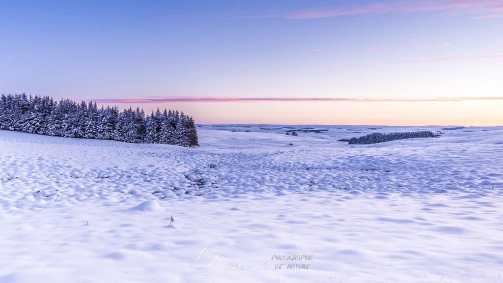 La douceur de la neige immaculée (Plateau de l'Aubrac) n°0222