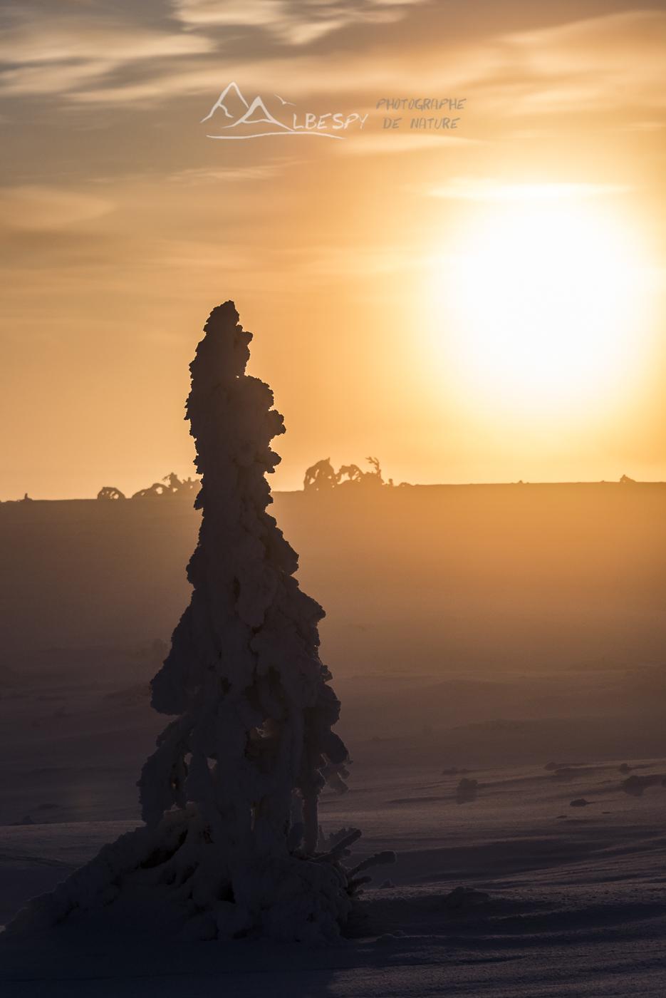 Le paradis par -30°C (Suède) n°1018